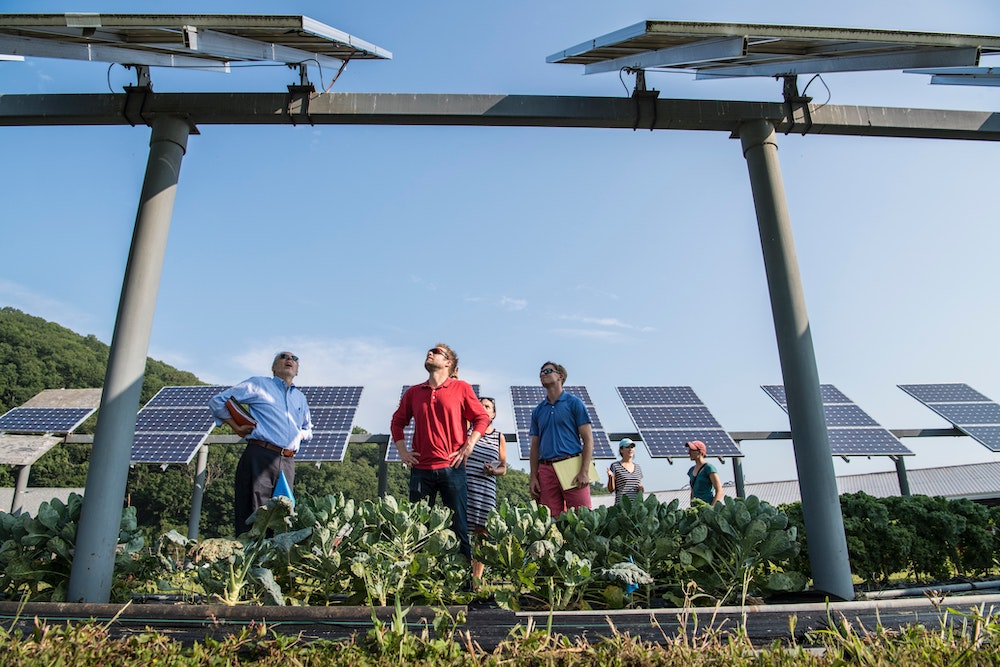 Local workers survey the solar panels they installed over their crops.